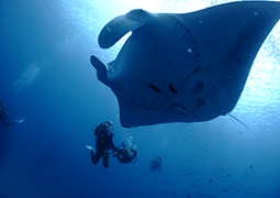 Full day FUN diving tours