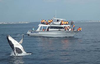 ザトウクジラに高確率で逢える。