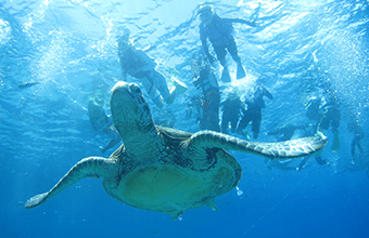 Snorkelling Tours1